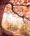 treerites