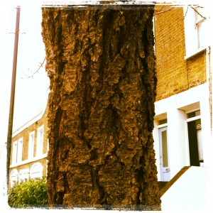 Cherry_Tree_Bark_East_Dulwich