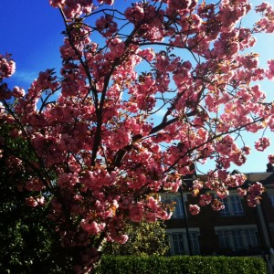 Library_Blossom