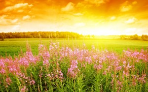 Sunlight_on_ a_field