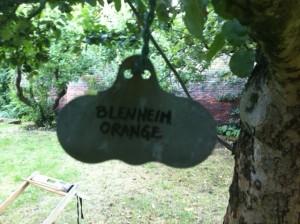 Blenheim_Oranges