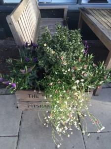 Pitshanger Plants
